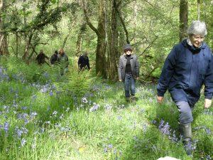 Bluebell wood parish walk